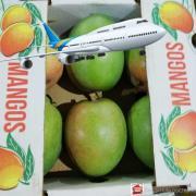 Mango KATE Dominican Republic by plane