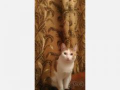 Пропала кошка, г. Троицк, 2 микрорайон, д. 8, Челябинская обл